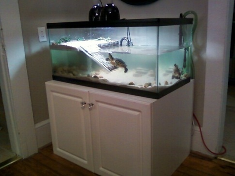 Turtles : What is the optimum height/distance for a turtles basking ...