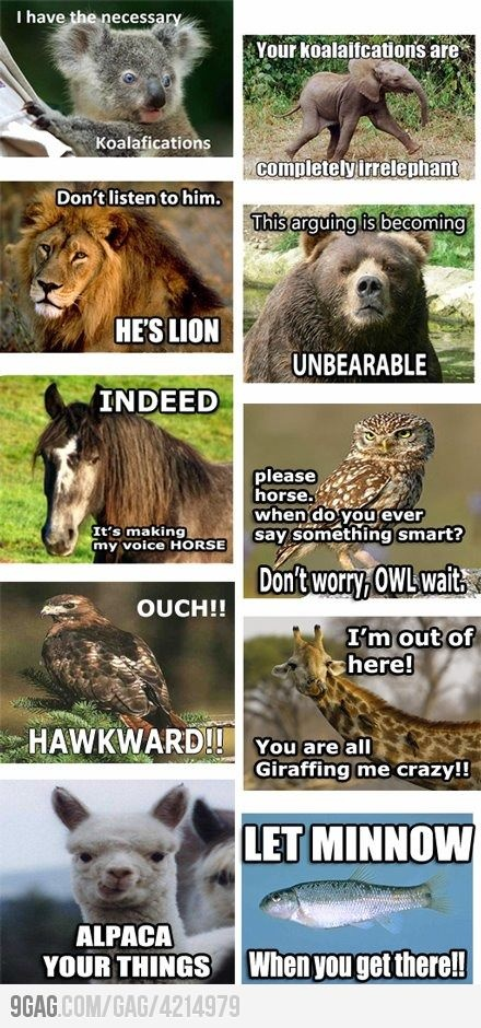 Animal jokes from 9gag